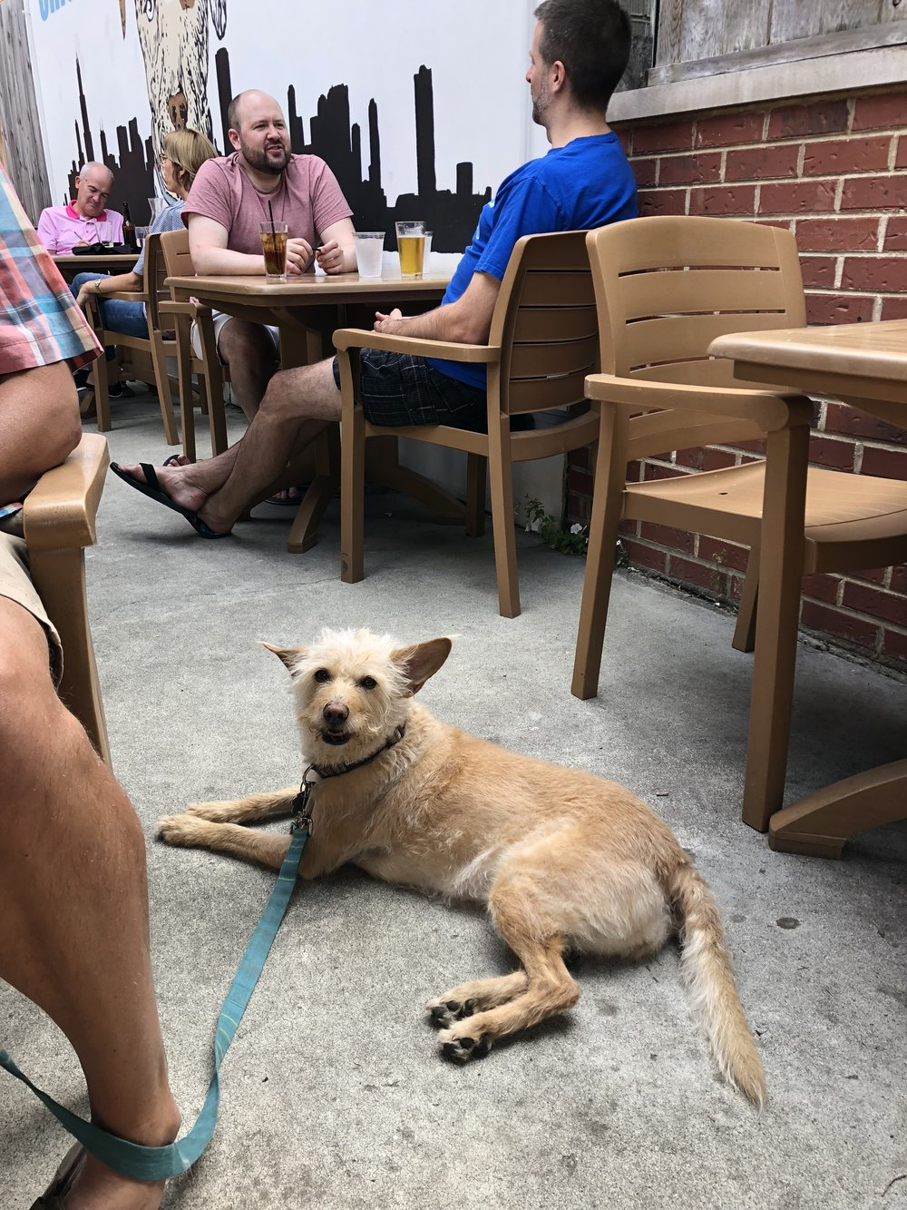 George Street Pub - GSP is a sports bar with a dog-friendly back patio. This Lincoln Park neighborhood bar has a solid beer list and is a Maryland college and professional sports hub.