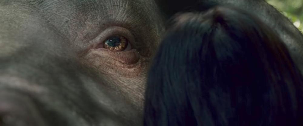 Okja Eye