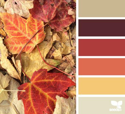 Fall Colors -