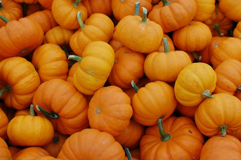 pumpkins-379869_1280.jpg
