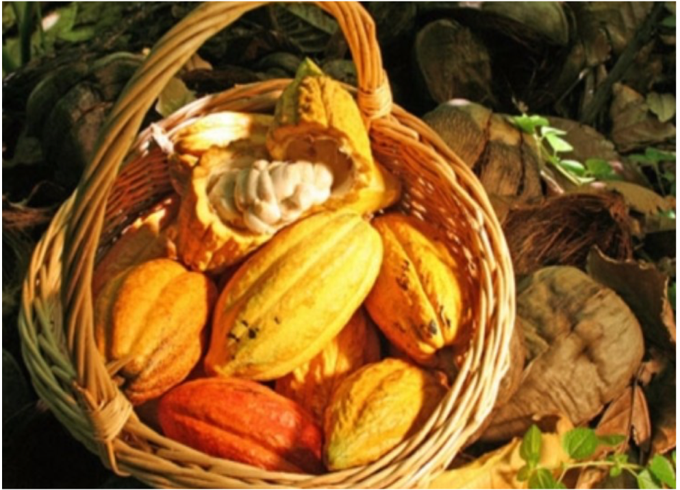 FOND DOUX PLANTATION   A traditional and still fully operating cocoa plantation sitting on 135 acres of land and that takes visitors through the fermentation, drying process and roasting of cocoa beans. The estate also offers a number of trails through its cocoa trees and exotic crops.