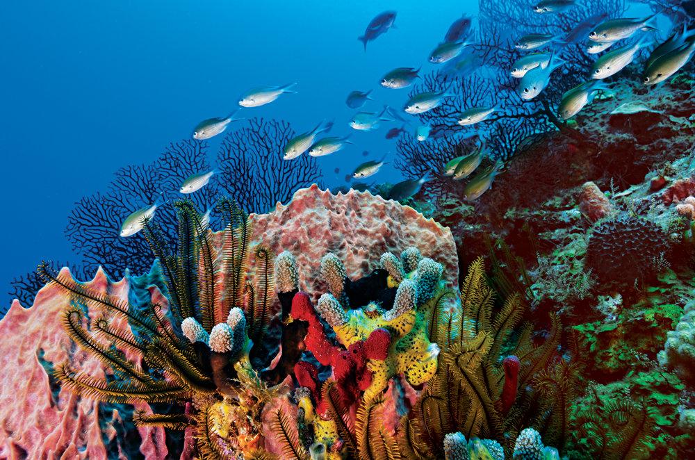 scuba diving 2.jpg
