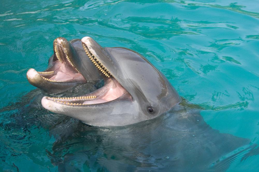 dolphins final.jpg
