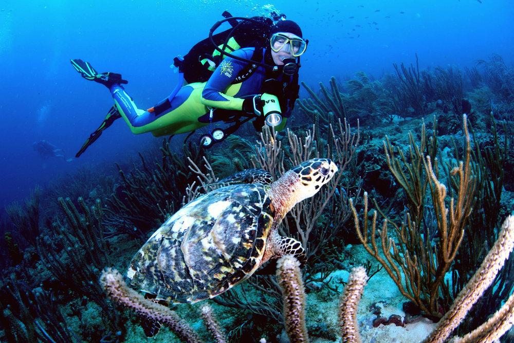 diver & turtle - aquanauts.jpg
