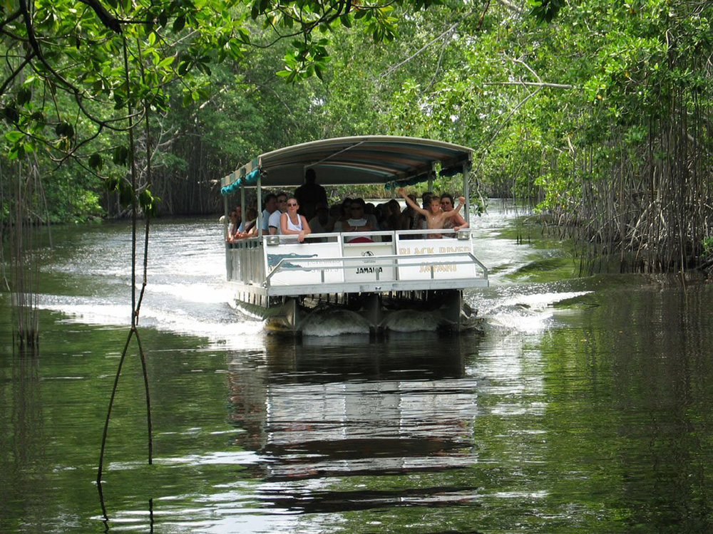 xapproaching the mangrove avenue - black river safari.jpg