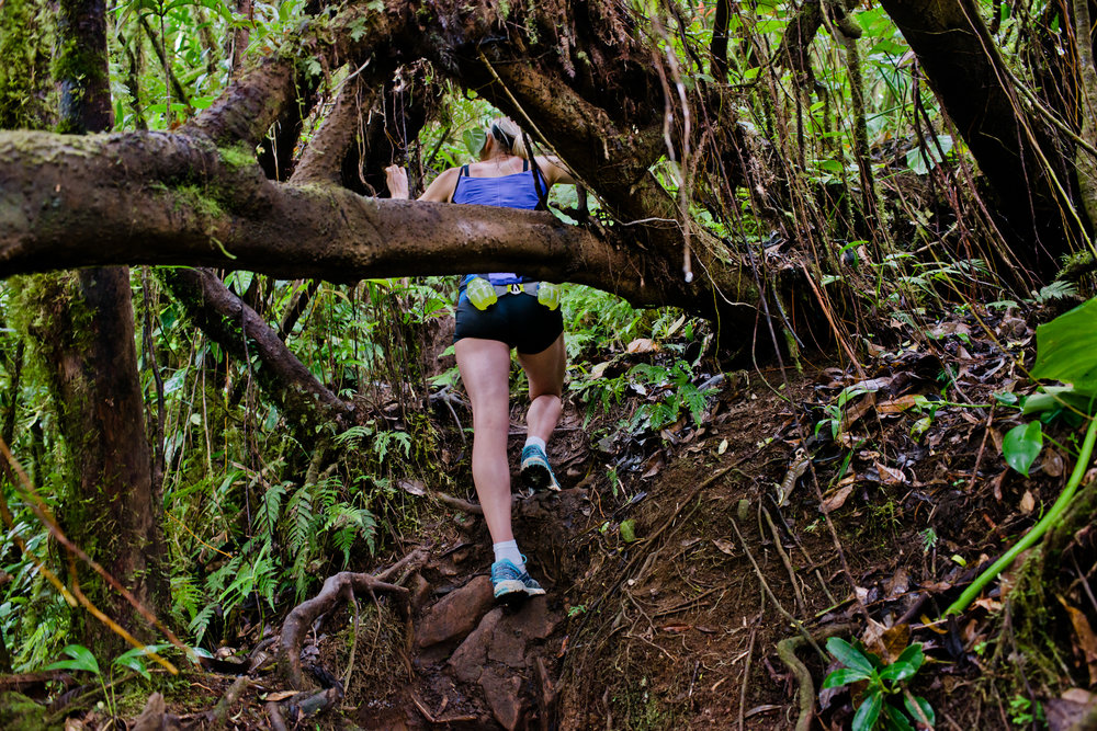 ecotourism - rain forests(1).jpg