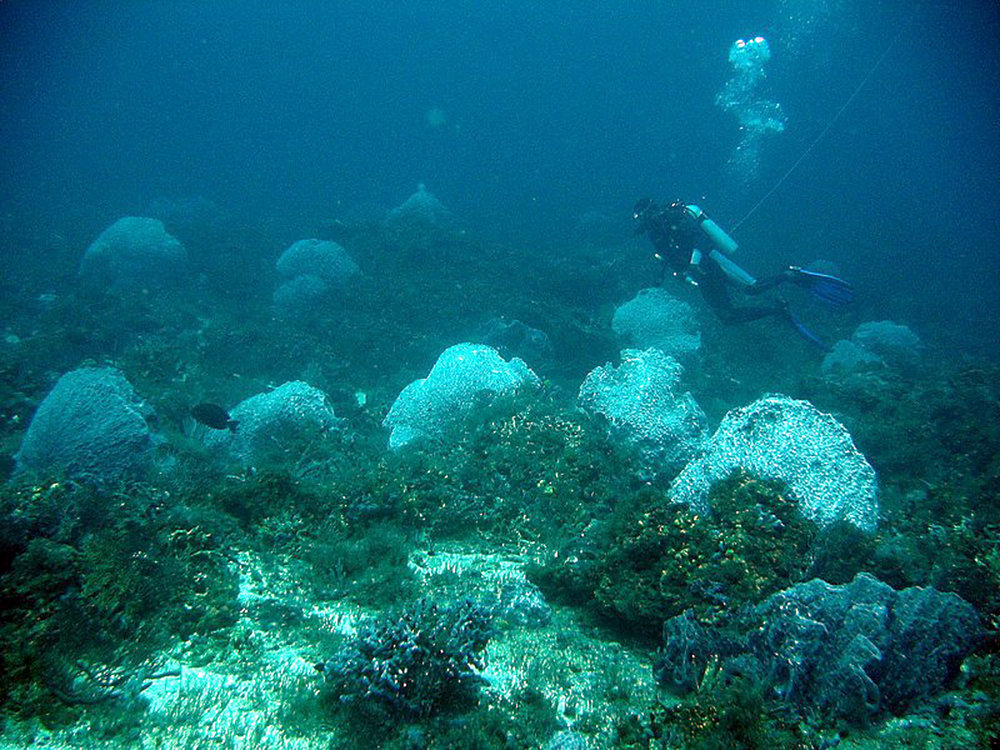 d is for diver's dream and diver's thirst. strong currents on both of these dives..jpg