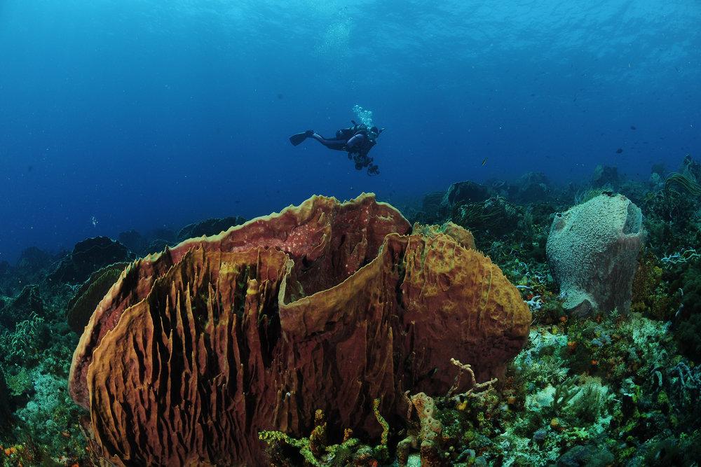 (4)tobago diving - tobago dept of tourism.jpg