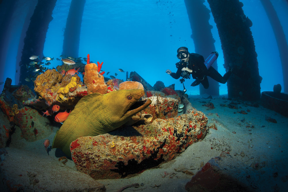 frederiksted pier diving.jpg