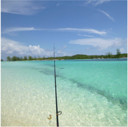 SHARK CREEK (GREAT HARBOUR CAY)   A beautiful spot with pristine sand, crystal-clear waters and plenty of seashells...  More