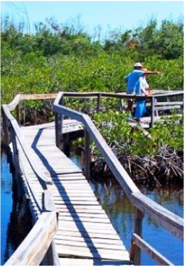 ECOTOURISM IN ANDROS   Ecotourism is so important in The Bahamas that a whole month is dedicated to it in October every year, with an entire month of events celebrating the country's natural environment.