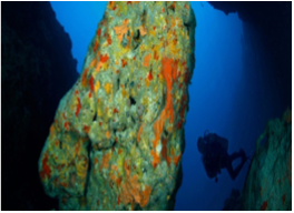 THE GREAT LUCAYA / GRAND BAHAMA WALL   Grand Bahama's southern coast is surrounded with a continuous reef and drop-off with hundreds of walls featuring swim-throughs, caves and caverns, with the top of the wall beginning at an approximate depth of 80 feet.