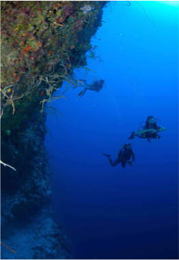 THE ANDROS WALL   Regarded as The Bahamas' greatest wall dive, a large site featuring canyons and mountains of every shape and size.