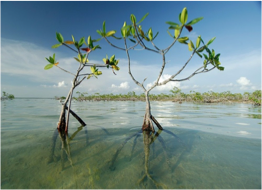 WEST SIDE NATIONAL PARK   This National Park was established in 2002 to protect The Bahamas' most productive marine nursery that are the area's pristine coastal wetlands. It is home to the bonefish and is a prime feeding ground for the endangered West Indian Flamingo.