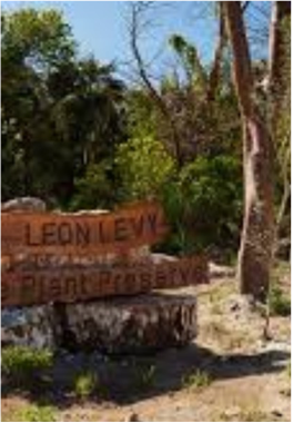 LEON LEVY NATIVE PLANT RESERVE   Eleuthera's first National Park was created by the Bahamas National Trust (BNT) and the Leon Levy Foundation to preserve the woodland coppice and mangrove forest in order to protect the indigenous species living in the is 25-acre sanctuary.