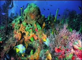 CAYO SANTA MARIA - 24 SITES    Recommended: divers will find great natural beauty at the sites near Fragoso, Cobo, Frances, Las Brujas, Borracho, Espanol de Afuera, Los Diablilos, Ensenachos, Santa Maria, Los Caimanes Cays.