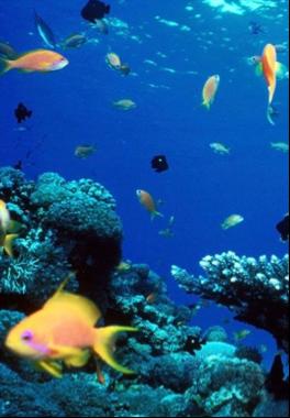 SANTIAGO DE CUBA - 68 SITES    Recommended: Piedra de las Ariguas, La Pared, La Cueva, Open Water, Morrillo Chico, Guarico, Spring Carol, El Tanque, El Mandinga Reef.
