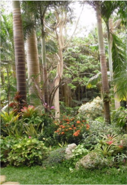 HUNTE'S GARDENS    Located in St Joseph, these gardens are the creation of Anthony Hunte, who composed a unique landscape of tropical plants, statues and antiques, enhanced by the light classical and opera music floating in the air.