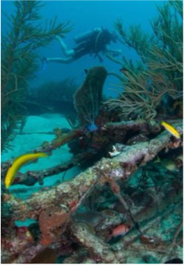 FRIARS CRAG    This 100 feet Dutch freighter was sunk in 1984 and now lies in 55 feet of water. The site also features a beautiful reef nearby, for divers to enjoy the best of reef and wreck diving in one site.
