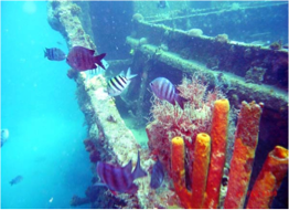 PARMIR    Located at the North of the island and lying in 60 feet of water, this 165 feet long wreck offers a relaxing dive that is perfect for beginners.