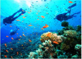 DOTTINS   This reef dive is popular for its beautiful marine life abounding with tropical fish, corals, turtles, and barracudas.