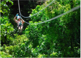 """AERIAL TREK ZIPLINE TOUR   If you've ever fancied the thrill of a zipline this is the place to do it! Here, you can glide above the famous """"Jack In The Box Gully"""". Your tour takes you over eight platforms, each with two experienced and knowledgeable guides who will provide you with information on different areas of the eco-system you are experiencing as well as ensure your safety as you move from platform to platform."""