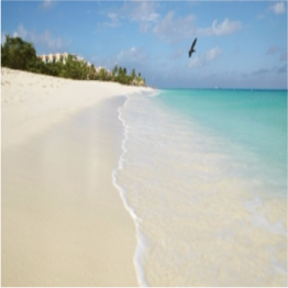EAGLE BEACH    Eagle Beach has been rated in the top 3 beaches in the Caribbean, and...  More