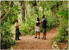 RAINFOREST MEDICINE TRAIL    This trail teaches visitors about the virtues of the plants traditionally used by the Maya for medicinal purposes, such as the red gumbo-limbo.