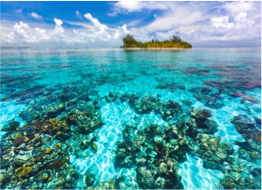 SOUTHWATER CAYE MARINE RESERVE    This beautiful 15 acres-large caye is a quieter spot with stunning tropical beach settings with a beautiful reef located a short swim away, ideal for snorkelling and diving.