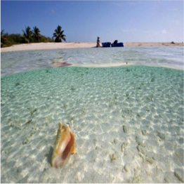 OWEN ISLAND     Owen Island is pocket-sized- even compared to Little Cayman! A tiny island just off...  More