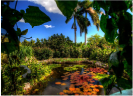 QUEEN ELIZABETH II BOTANIC PARK    Located on the North end of Grand Cayman Island, this park was inaugurated on the 27th February 1994 by Her Majesty Queen Elizabeth II herself, and offers an experience encompassing both nature and heritage.