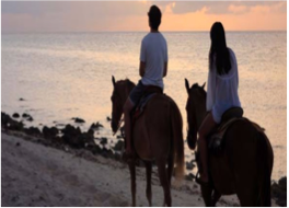HORSEBACK RIDING    A fun alternative to your usual hike may be to explore the land and coastline on horseback, with the option of taking a swim with the horse, or even to organise a romantic sunset beach ride.