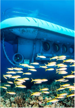 ATLANTIS SUBMARINES    If you're not keen on scuba diving but would like to explore the submarine world of the Cayman Islands, the Atlantis Submarine is accessible to everyone and offers the opportunity to get closer to coral canyons, ship wrecks and healthy reefs, all housing a colourful variety of marine life that you will be able to observe from the comfort of your seat, whilst staying dry and immune to any pressure effects.