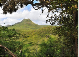 CHRISTOFFEL NATIONAL PARK   In the heart of the northern tip of the island is Christoffel National Park, a 4450 acres wide wildlife preserve boasting some of the most splendid landscapes Curaçao has to offer. There, nature lovers will find a choice of hiking trails varying in length and difficulty, giving them a chance to observe and explore the island's fauna and flora, through both luscious gardens and desert sceneries.