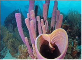 KATHY'S PARADISE   A dive at Smokey often ends by drifting towards the stunning Kathy's Paradise, where divers can enjoy great visibility and observe large healthy corals, as well as sharks and stingrays.
