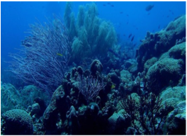 SELDOM REEF & BULLENBAAI   For intermediate and advanced divers, these two sites offer more than the average wall dive, with Seldom Reef boasting a 27 meters wall, and Bullenbaai being considered one of the island's best sites.