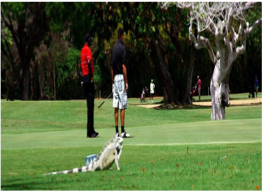 CURACAO GOLF & SQUASH CLUB   A dynamic club of about 600 members with an 18-holes par 70 course set over 10 greens, and matches organised on a daily basis.