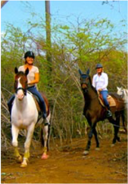 FINCA CASIU   A tropical Finca providing a variety of services, whether you're an experienced rider or a total novice looking to take lessons.