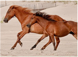 MANEGE SOCIETE HIPPIQUE CURACAO   Riding classes by professional and experienced instructors, with a wide selection of horses and featuring a covered riding course, jumping pit, lunging pit, as well as a cafeteria.