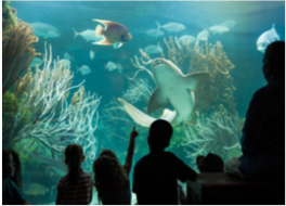 BERMUDA AQUARIUM, MUSEUM AND ZOO   An impressive and colourful collection of wildlife and culture in this all-round complex that makes a perfect day out for the whole family.