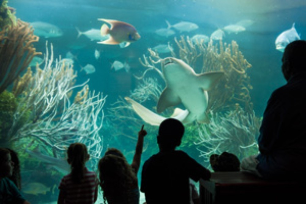AQUARIUM   If over and under waters aren't your thing, but you wish to discover the island's maritime life, head to the capital of Hamilton Parish where you will find a splendid aquarium, alongside a zoo and a museum, for you to admire a display of colourful sea life, wild life and history, with your two feet firmly on the ground!