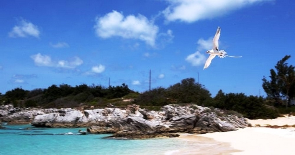 COOPER'S ISLAND NATURE RESERVE   Located at the southern tip of Bermuda, this beautiful nature reserve features great wildlife spotting walking trails, as well as beautiful beaches, including Turtle Beach and Clearwater Beach at Annie's Bay.