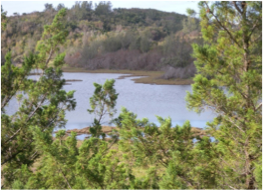 SPITTAL POND NATURE RESERVE   This bird sanctuary with beautiful sea views is located in Smith's parish and regarded as Bermuda's largest and best reserve. It also features a large pond, some stunning rock formations, unique wildlife and plantations.