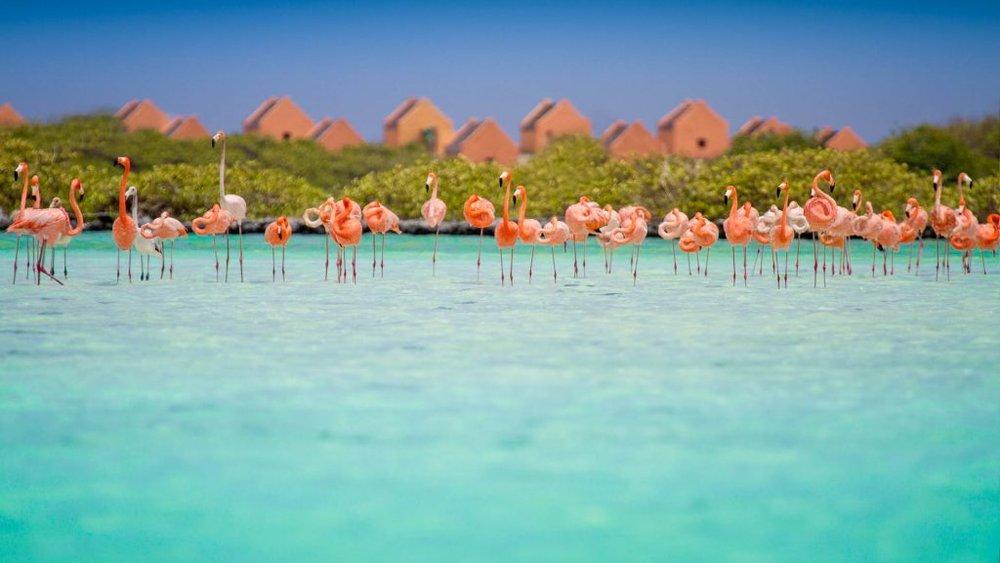 Flamingoes-slave-huts-Bonaire.jpg