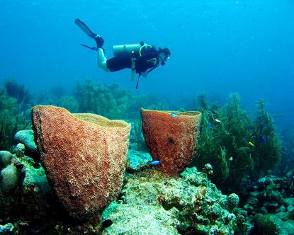 bari-reef.jpg