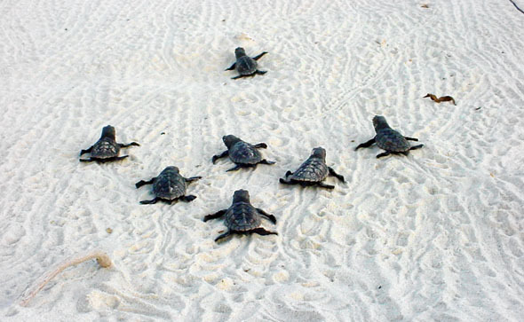 Bonaire-Sea-Turtle-Conservation.jpg