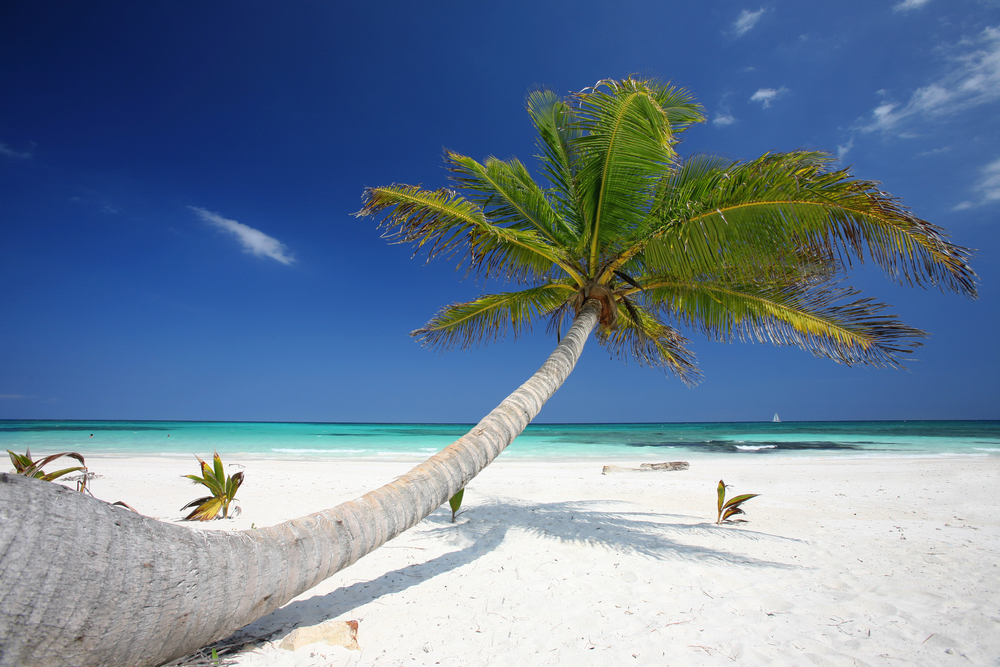 Cancun-beach-with-palm-tree.jpg