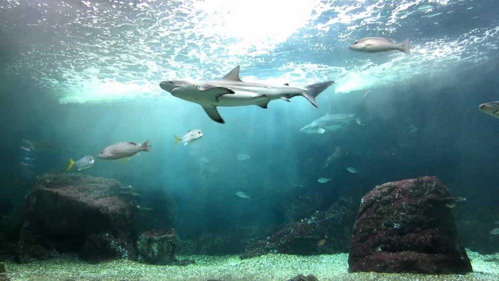Guadeloupe-Aquarium.jpg