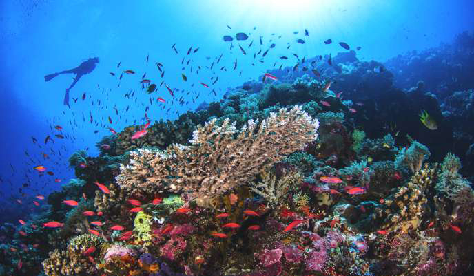 guadeloupe-diving-marie-galante.jpg