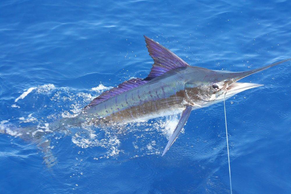 st-barts-Deep-Sea-Fishing.jpg